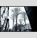 Frank Titze, Ulm/Germany - No. 4087 : Film 3:2 VII - Backyard Trees - 947x640 Pixel - 709 kB