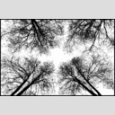 Frank Titze, Ulm/Germany - No. 4088 : Film 3:2 VII - Tree Cross - 953x640 Pixel - 536 kB