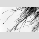 Frank Titze, Ulm/Germany - No. 4110 : Film 3:2 VII - Black Branches V - 959x640 Pixel - 243 kB