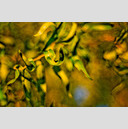 Frank Titze, Ulm/Germany - No. 411 : Trees I - Leaves III - 959x640 Pixel - 182 kB