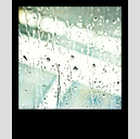 Frank Titze, Ulm/Germany - No. 4120 : Pola 600 I - Window Rain III - 533x640 Pixel - 292 kB