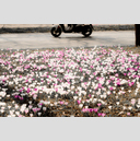 Frank Titze, Ulm/Germany - No. 4149 : Film 3:2 VII - Crocus and Scooter - 959x640 Pixel - 949 kB