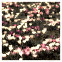 Frank Titze, Ulm/Germany - No. 4151 : Square 1:1 III - Crocus IV - 640x640 Pixel - 435 kB