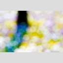 Frank Titze, Ulm/Germany - No. 4158 : Film 3:2 VII - Flowers and Tree II - 959x640 Pixel - 221 kB