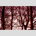 Frank Titze, Ulm/Germany - No. 4159 : Film 3:2 VII - Red Trees - 959x640 Pixel - 1250 kB