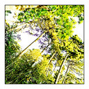 Frank Titze, Ulm/Germany - No. 418 : Trees I - Green-Yellow Trees - 640x640 Pixel - 442 kB