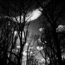 Frank Titze, Ulm/Germany - No. 4209 : Square 1:1 III - Sky Between Winter Trees - 640x640 Pixel - 276 kB