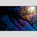 Frank Titze, Ulm/Germany - No. 4266 : Film 3:2 VII - Tree and Iris I - 953x640 Pixel - 955 kB