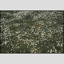 Frank Titze, Ulm/Germany - No. 4274 : Film 3:2 VII - Daisy Meadow I - 953x640 Pixel - 1015 kB