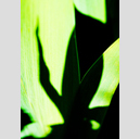 Frank Titze, Ulm/Germany - No. 4281 : Non Common II - Lily Shadow - 457x640 Pixel - 180 kB