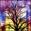Frank Titze, Ulm/Germany - No. 4291 : Ulm Center - Tree and Glass - 640x640 Pixel - 939 kB