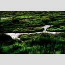 Frank Titze, Ulm/Germany - No. 4377 : Film 3:2 VIII - Camargue Green - 959x640 Pixel - 994 kB