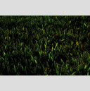 Frank Titze, Ulm/Germany - No. 4410 : Film 3:2 VIII - Green Corn - 959x640 Pixel - 835 kB