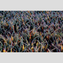 Frank Titze, Ulm/Germany - No. 4426 : Film 3:2 VIII - Colored Corn II - 959x640 Pixel - 1095 kB
