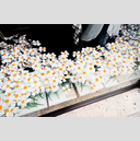 Frank Titze, Ulm/Germany - No. 4471 : Film 3:2 VIII - Field of Flowers - 959x640 Pixel - 691 kB
