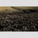 Frank Titze, Ulm/Germany - No. 4517 : Film 3:2 VIII - Dark Corn IV - 959x640 Pixel - 951 kB