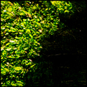 Frank Titze, Ulm/Germany - No. 4643 : Square 1:1 IV - Under Water Green - 640x640 Pixel - 649 kB