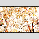 Frank Titze, Ulm/Germany - No. 4725 : Film 3:2 VIII - Red Trees - 953x640 Pixel - 1287 kB