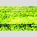 Frank Titze, Ulm/Germany - No. 4839 : Film 3:2 VIII - New Green on Black VIII - 959x640 Pixel - 680 kB
