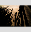Frank Titze, Ulm/Germany - No. 4858 : Film 3:2 VIII - Sunflower Shadows - 959x640 Pixel - 660 kB