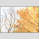 Frank Titze, Ulm/Germany - No. 4864 : Film 3:2 VIII - Leaf Border - 955x640 Pixel - 1057 kB