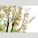 Frank Titze, Ulm/Germany - No. 4865 : Rect 10:7 I - Watercolor Leaves I - 896x640 Pixel - 821 kB