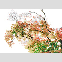 Frank Titze, Ulm/Germany - No. 4866 : Rect 10:7 I - Watercolor Leaves II - 896x640 Pixel - 774 kB