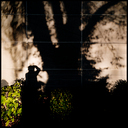 Frank Titze, Ulm/Germany - No. 4873 : Y 2017-04 - Tree Shadow with Photographer II - 640x640 Pixel - 463 kB
