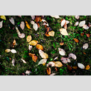 Frank Titze, Ulm/Germany - No. 4874 : Film 3:2 VIII - Leaves - 959x640 Pixel - 1173 kB