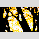 Frank Titze, Ulm/Germany - No. 4876 : Film 3:2 VIII - Golden Trees II - 959x640 Pixel - 377 kB