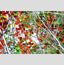 Frank Titze, Ulm/Germany - No. 4878 : Film 3:2 VIII - Red Green Leaves Variant I - 959x640 Pixel - 1096 kB