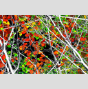 Frank Titze, Ulm/Germany - No. 4879 : Film 3:2 VIII - Red Green Leaves Variant I - 959x640 Pixel - 1106 kB