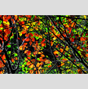 Frank Titze, Ulm/Germany - No. 4880 : Film 3:2 VIII - Red Green Leaves Variant III - 959x640 Pixel - 1121 kB