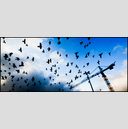 Frank Titze, Ulm/Germany - No. 4889 : Y 2017-04 - Birds III - 960x413 Pixel - 369 kB