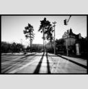 Frank Titze, Ulm/Germany - No. 4903 : Film 3:2 VIII - Street Trees - 947x640 Pixel - 333 kB
