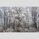 Frank Titze, Ulm/Germany - No. 5061 : Y 2017-06 - Winter Trees I - 959x640 Pixel - 934 kB