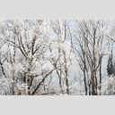 Frank Titze, Ulm/Germany - No. 5062 : Y 2017-06 - Winter Trees II - 959x640 Pixel - 996 kB
