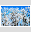 Frank Titze, Ulm/Germany - No. 5063 : Non Common II - Winter Trees III - 922x640 Pixel - 1040 kB