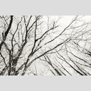 Frank Titze, Ulm/Germany - No. 5064 : Y 2017-06 - Winter Trees IV - 959x640 Pixel - 668 kB