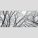 Frank Titze, Ulm/Germany - No. 5065 : Y 2017-06 - Winter Trees V - 960x411 Pixel - 421 kB