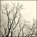 Frank Titze, Ulm/Germany - No. 5066 : Y 2017-06 - Winter Trees VI - 640x640 Pixel - 474 kB