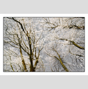 Frank Titze, Ulm/Germany - No. 5067 : Non Common II - Winter Trees VII - 922x640 Pixel - 893 kB