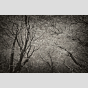 Frank Titze, Ulm/Germany - No. 5068 : Y 2017-06 - Winter Trees VIII - 959x640 Pixel - 741 kB