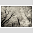 Frank Titze, Ulm/Germany - No. 5069 : Non Common II - Winter Trees IX - 922x640 Pixel - 549 kB