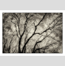 Frank Titze, Ulm/Germany - No. 5070 : Non Common II - Winter Trees X - 922x640 Pixel - 598 kB