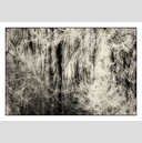 Frank Titze, Ulm/Germany - No. 5071 : Non Common II - Winter Trees XI - 922x640 Pixel - 629 kB