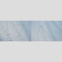 Frank Titze, Ulm/Germany - No. 5075 : Non Common II - Traces in Snow A and B - 960x320 Pixel - 323 kB