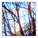 Frank Titze, Ulm/Germany - No. 5153 : Square 1:1 IV - Sunlight between Trees II - 640x640 Pixel - 435 kB