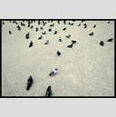 Frank Titze, Ulm/Germany - No. 5683 : Square 1:1 VI - Doves II - ImageWidth : --- xImageHeight : ---  Pixel - 724 kB