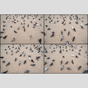 Frank Titze, Ulm/Germany - No. 5684 : Square 1:1 VI - Doves III - ImageWidth : --- xImageHeight : ---  Pixel - 758 kB